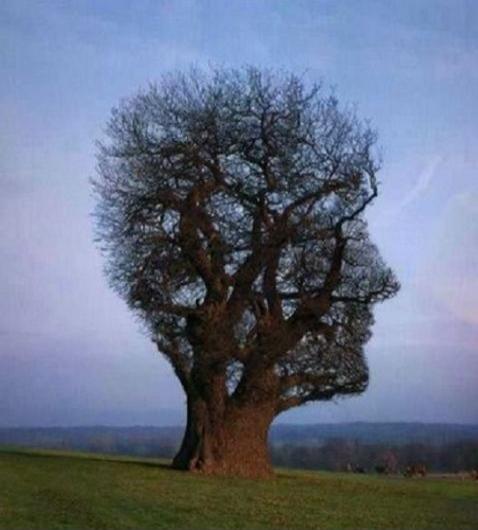 Amazing-tree-resizecrop-